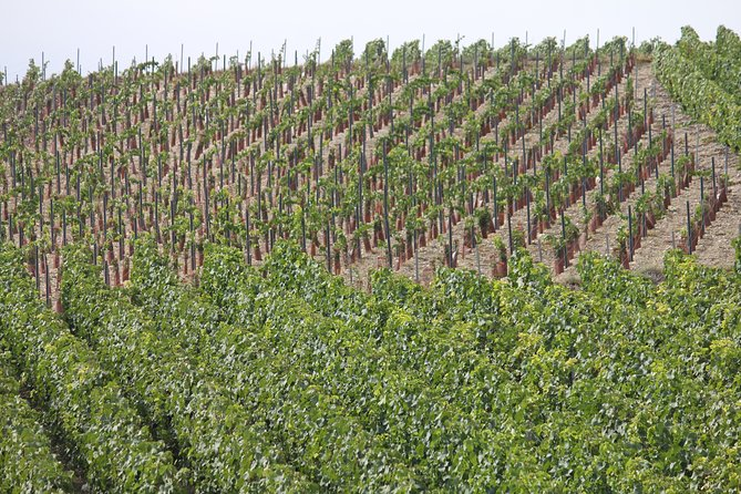 Private Half Day Champagne Triple Vineyard Tasting Tour from Reims by Car