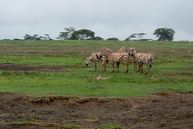 4-Days Green crater Lake, Lake Naivasha and Maasai Mara National Park