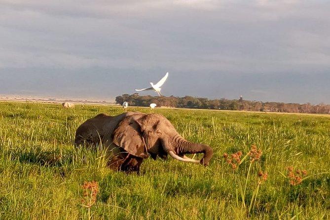 4-Days Green crater Lake, Lake Naivasha and Maasai Mara National Park