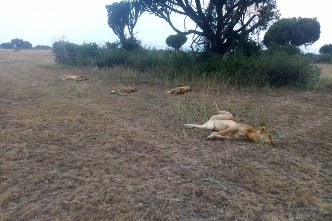 5days 4nights Wildlife tour kazinga channel - Queen Elizabeth National Park