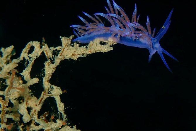Scuba diving in Naxos, Greece