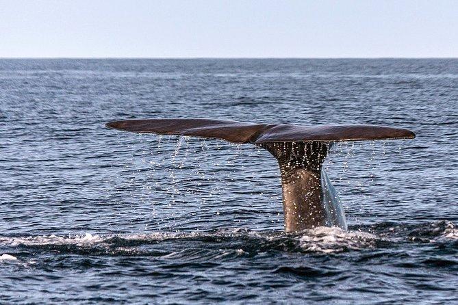 Mirissa Whale Watching - Passenger Boat Ride