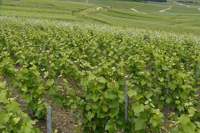Private Full Day Little Bubble Family Vineyard Tour from Reims or Epernay