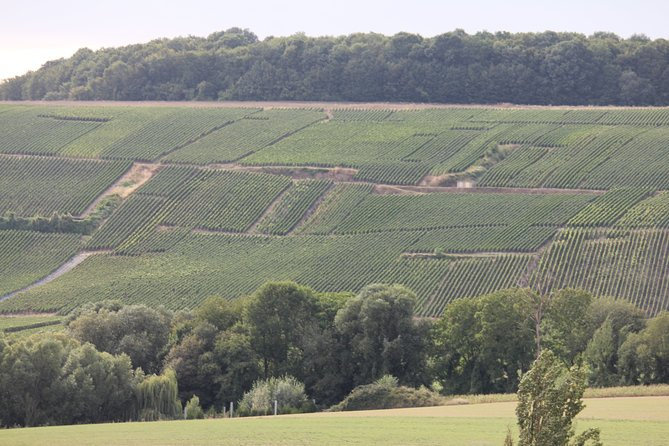 Private Half Day Premier Cru Triple Vineyard Champagne Tour from Reims by Car