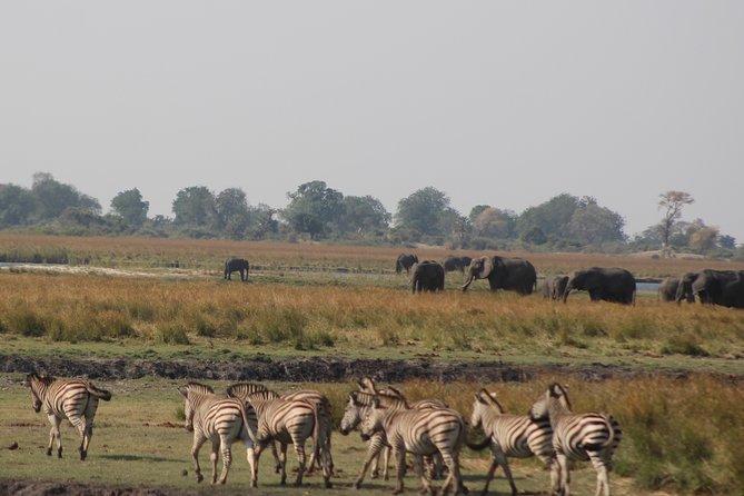 Chobe day safari from Victoria Falls