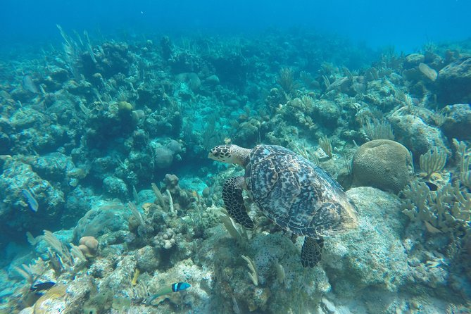 Shore Excursion: See Roatan by Land and by Boat
