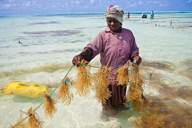 Seaweed Farming Tour