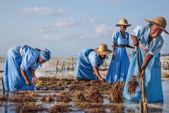 Seaweed Farming Tour