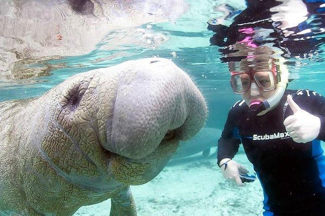 Manatee Snorkeling Tours