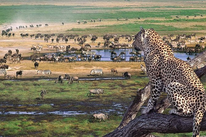 2 days Budget Lodge Safari Tour