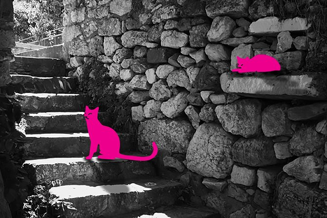 Self-guided Virtual Tour of the Cats of Athens: Cats on the prowl