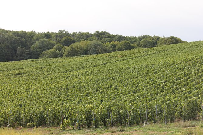 Private Full Day Champagne 5 Vineyard Tasting Tour