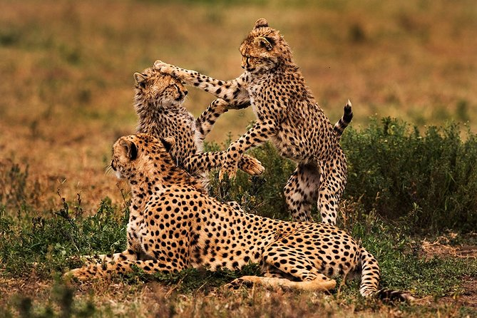 3 Days Private Safari Tour Tanzania
