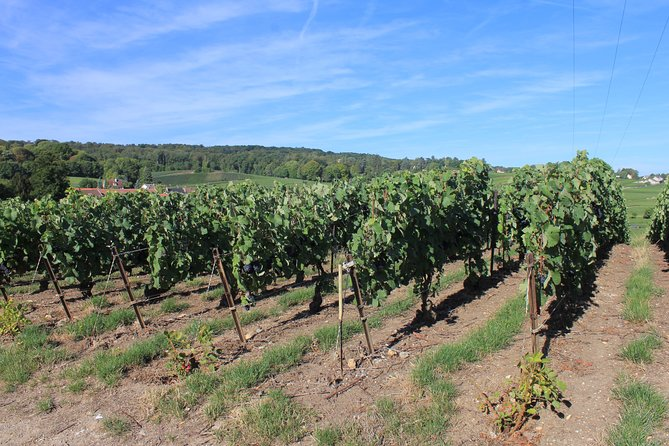 Private Half Day Grand Cru Village Champagne Vineyard Tour