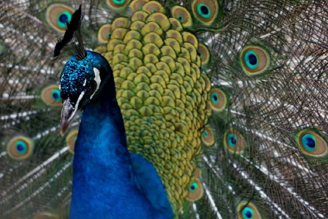 Wroclaw: Zoo with Private Transport and Tickets