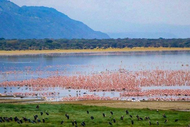 6 days Budget Camping Safari Tour Tanzania