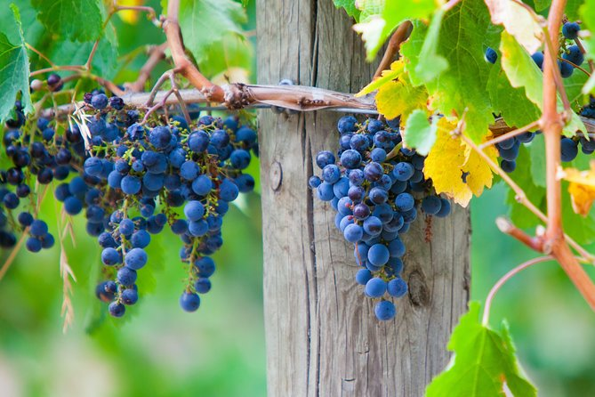 Mornington Peninsula Private Car Winery Tour.1-7 People One Car Price.