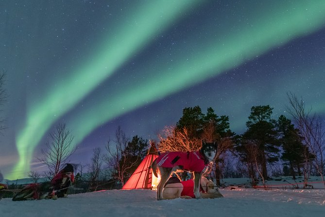5-Day Small-Group Northern Lights Photo Tour from Kiruna