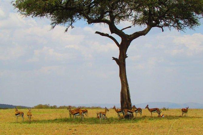 1 Day Safari to Olpajeta Conservancy
