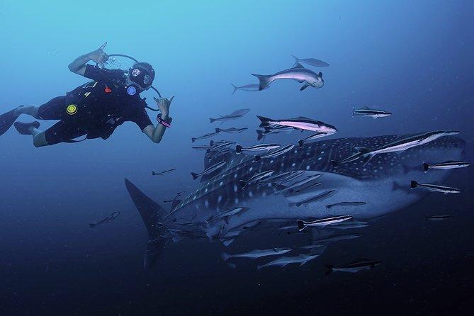 Scuba Dive in Koh Lanta, Thailand