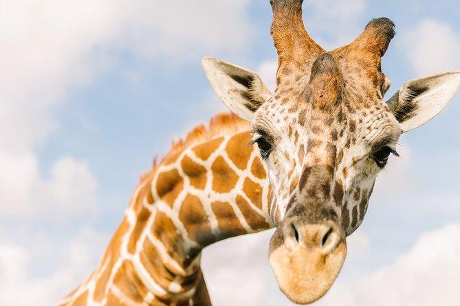 Central Florida Everglades and Safari Park Tour