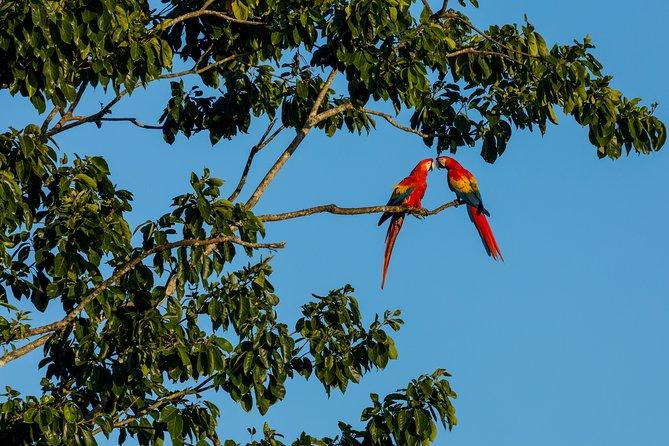 Wild Macaws Tours in Punta Islita from Playa Samara