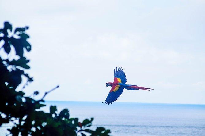 Wild Macaws Tours in Punta Islita - Playa Samara