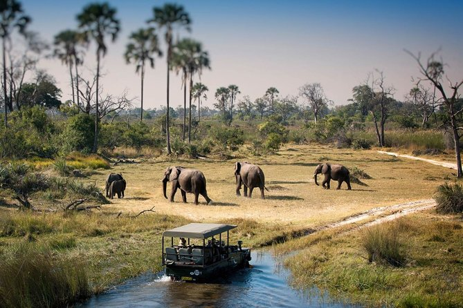 Safari Day Tour to Chobe National Park from Victoria Falls