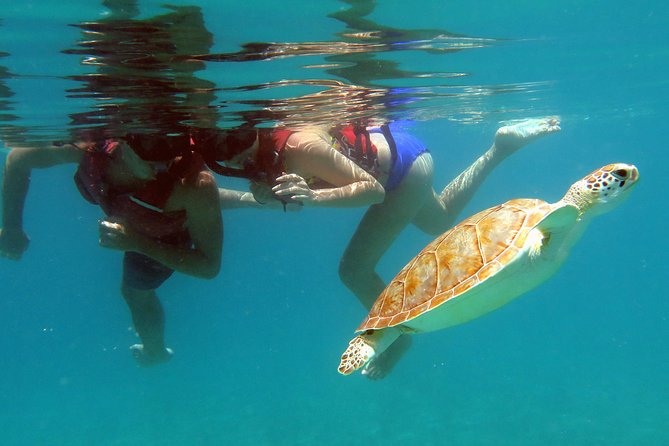 Beach Hop - Two snorkel spots: with turtles and coral reef