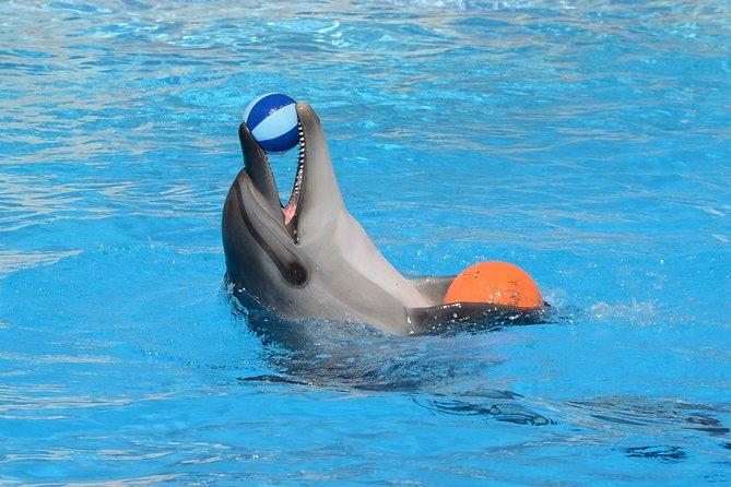 Dolphin Show Fabulous Senzo- Hurghada
