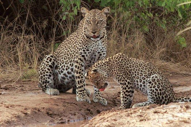 2 Days Safari To Queen Elizabeth National Park Uganda