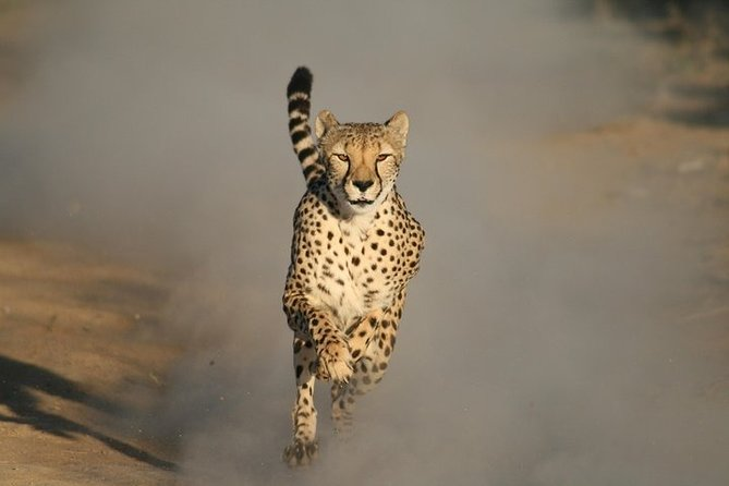 Cheetah Outreach and Cape Winelands Tour.