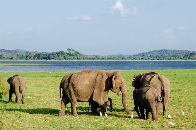 Transfer from Colombo to Trincomalee or Nilaveli - Elephant safari en route