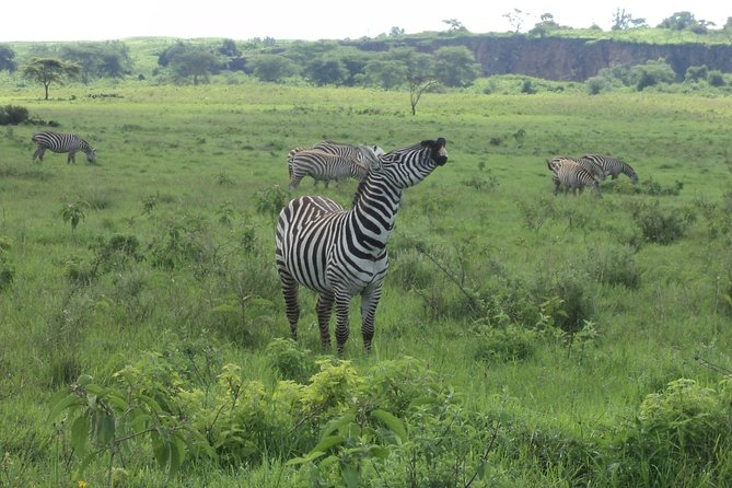 Nairobi Tour to the Lake Nakuru National Park
