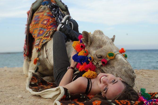 Two Hours camel Riding - Sharm El Sheikh