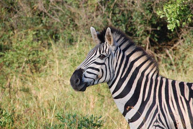 Mosi Oa Tunya National Park Game Drive & White Rhino Safari Experience