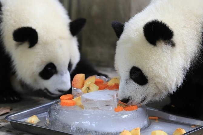 Private Full Day Chengdu Panda Base and Dujiangyan Irrigation System Tour