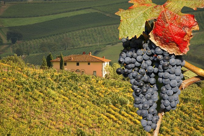 Montalcino and Pienza Tuscany Wine&Cheese ShoreExcursion from Civitavecchia Port