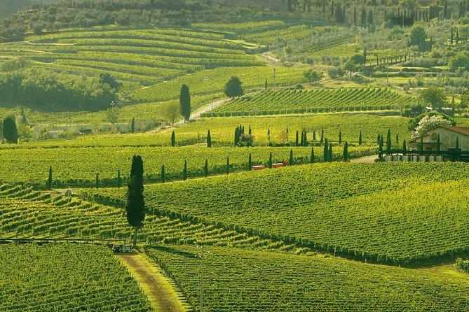Truffle and Brunello Sommelier Vip Experience in Tuscany Lands from Rome