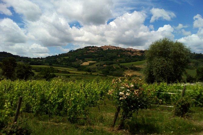 Montalcino and Pienza Tuscany Wine&Cheese ShoreExcursion from Civitavecchia Port