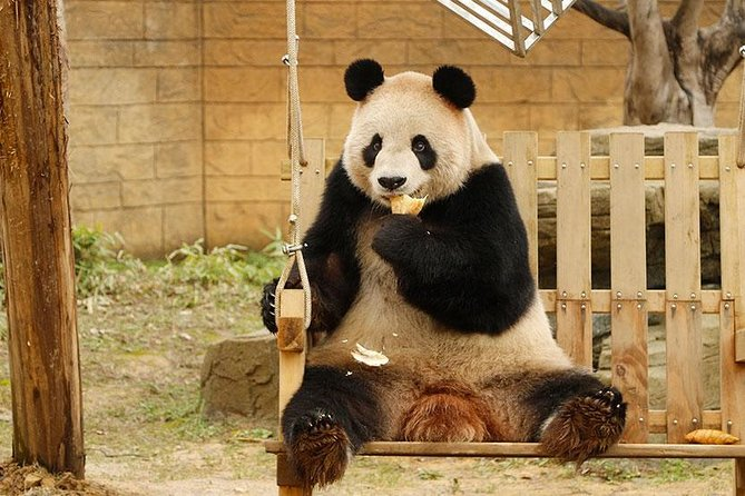 Private Transfer between Hangzhou Safari Park and City Hotels