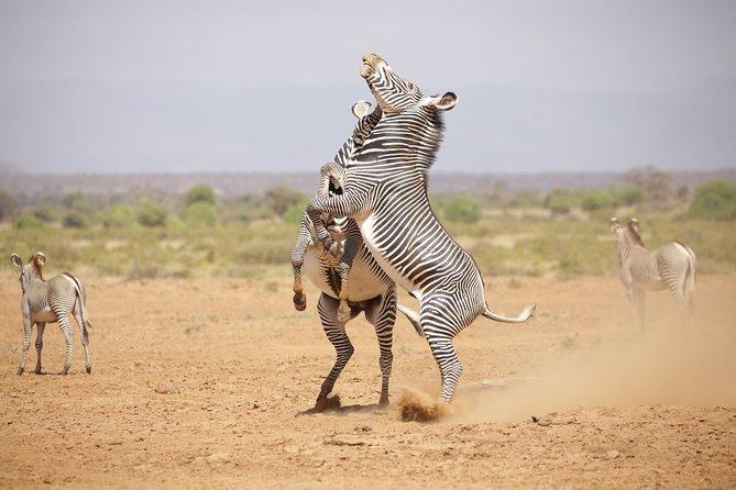 Samburu national reserve Dream tour