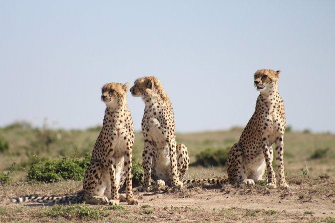 06 day spice up kenya safari