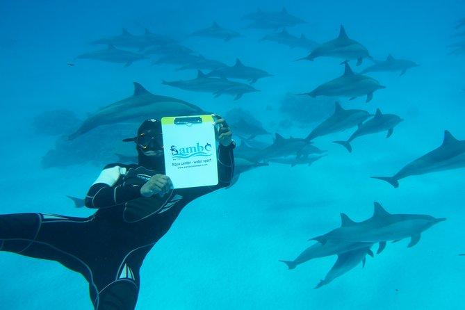 Over Night Swim with Dolphin in Sataya Reef Sea Trip & intro dive - Marsa Alam