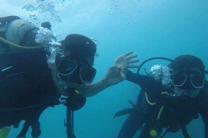 Combo 1 dive + plankton
