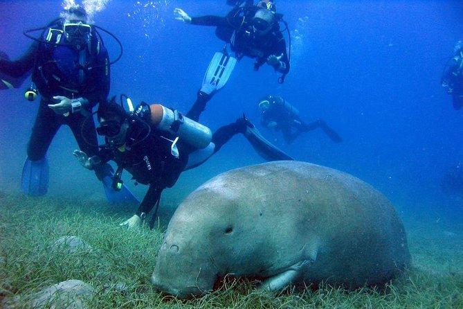 Marsa Mubarak Snorkeling Sea Trip & intro dive – Marsa Alam