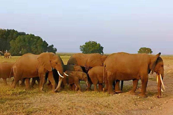 3 days amboseli/tsavo west national park