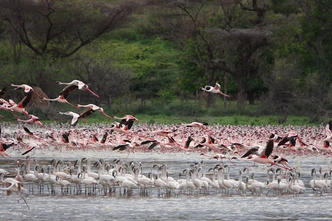 5 days a adventure lake bogoria/lake nakuru/masai mara /nairobi