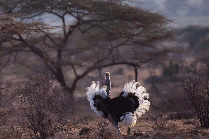 5 day classic samburu national reserve