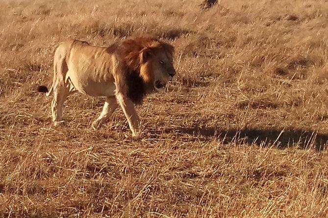 11 Days Safari to Aberdare Nakuru , Maasai Mara Amboseli and Zanzibar Island.
